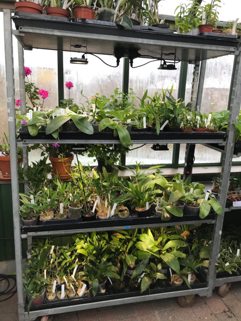 Hylla med orkidéer i växthuset